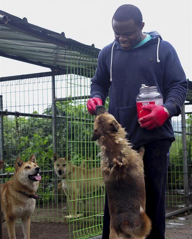 Animal shelter volunteer feeding a dog